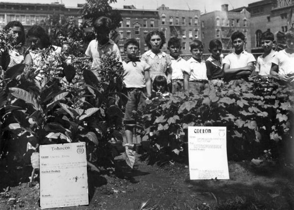 Farm Contest in Jefferson Park, East Harlem, N.Y.C., 1939